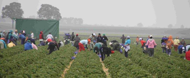 Saisonarbeiter*innen in Landwirtschaft und Fleischindustrie schützen – jetzt!