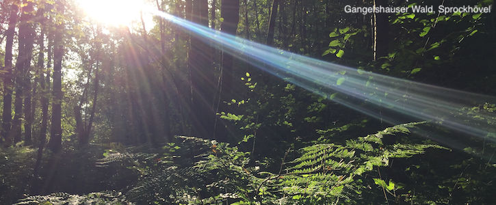 Stoppt die Gewerbegebietspläne für den Gangelshauser Wald!