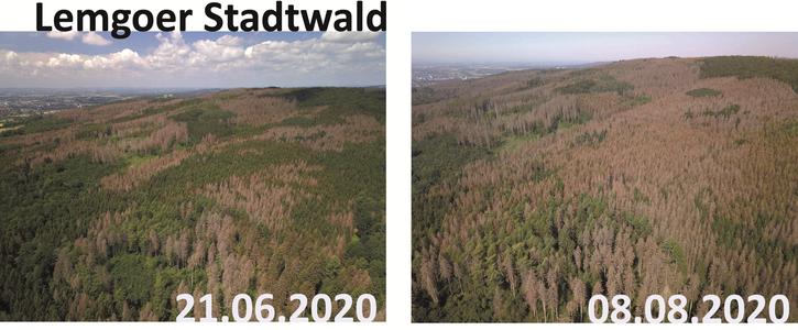 Unsere Wälder sterben!  Nationalen Wiederbewaldungsplan beschließen!  Klimaschutzgesetz jetzt!