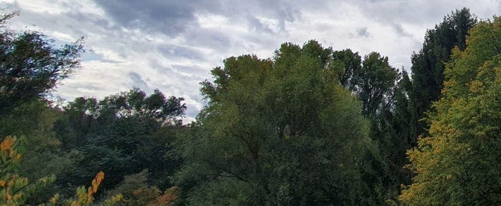 Rettet unseren kleinen Urwald in Witten Annen!