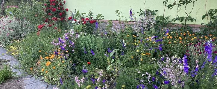 Plauener Vorgärten für Artenvielfalt und ein gesundes Stadtklima