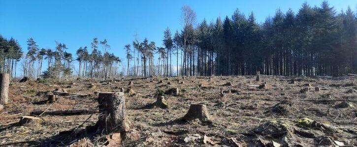 Alle Baumfällungen  auf der Montabaurer-Höhe sofort stoppen!