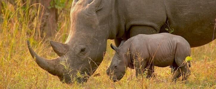 Save Rhino Fund Uganda