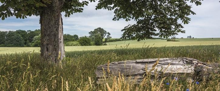 Keine Legehennenanlage in Cantnitz, Feldberger Seenlandschaft