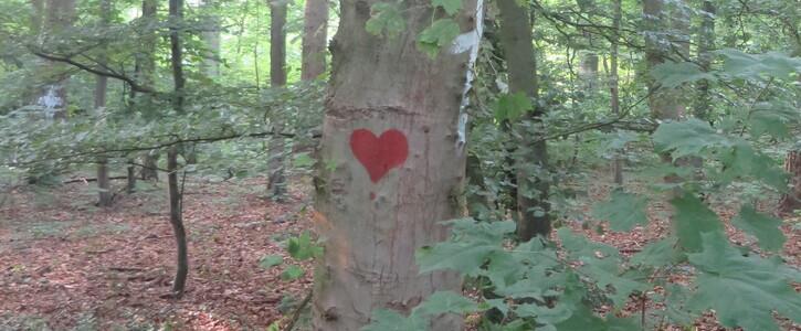 Keine Rodung des Steinhausener Waldes