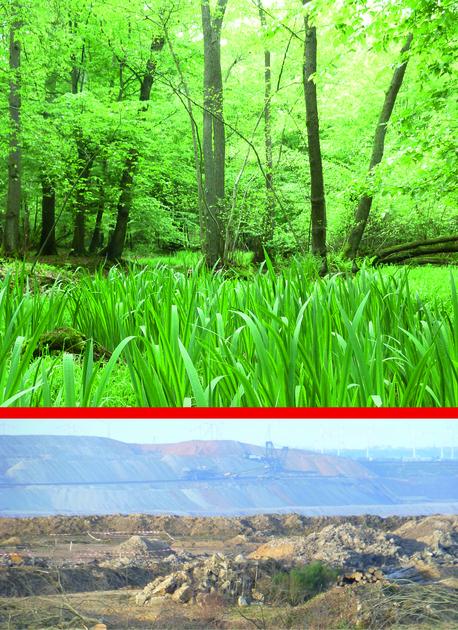 Jetzt unterzeichnen: Hambacher Wald retten und Klima schützen!