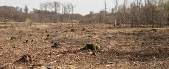 Rettet den Süntel - Nein zum Kahlschlag im Naturschutzgebiet