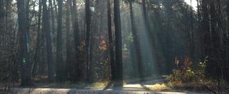 Hauptsmoorwald schützen! Kein Industriegebiet in Bamberg Ost!