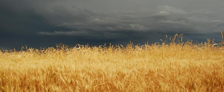 Klimakrise aufhalten - eine Zukunft für die Landwirtschaft
