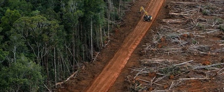 Schützt den Regenwald - NEIN zu Alufolie!