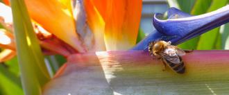 Rettet die Bienen! (Volksbegehren Artenvielfalt vom 31.01.19 bis 13.02.19)