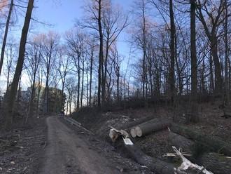 Es reicht! Keine massive Holzernte mehr im Stuttgarter Wald - dafür Naherholung u. Waldspielplätze!