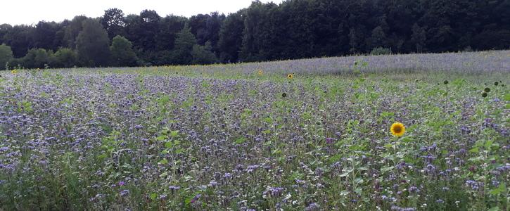 Förderung von Blühflächen in Schleswig-Holstein