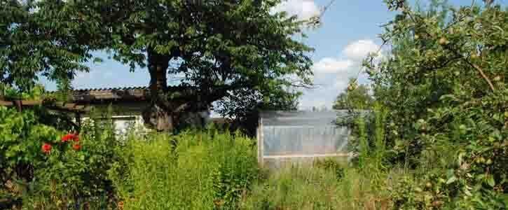 Die Vorschriften im Kleingartenwesen sind nicht mehr zeitgemäß, Korrekturen sind dringend notwendig