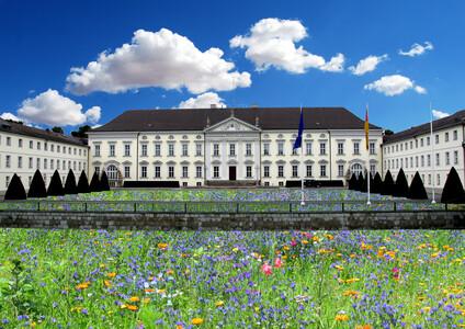 Wildblumenwiese ums Schloss Bellevue
